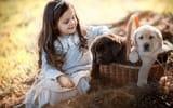 Обои: Irina Nedyalkova, корзина, собаки, ребёнок. девочка, природа, щенята, животные, щенки