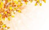 Обои про рабочего стола: блески, листья, осень, веточка, пузыри