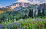 Обои: США, облака, горы, деревья, холмы, природа, цветы, поляна