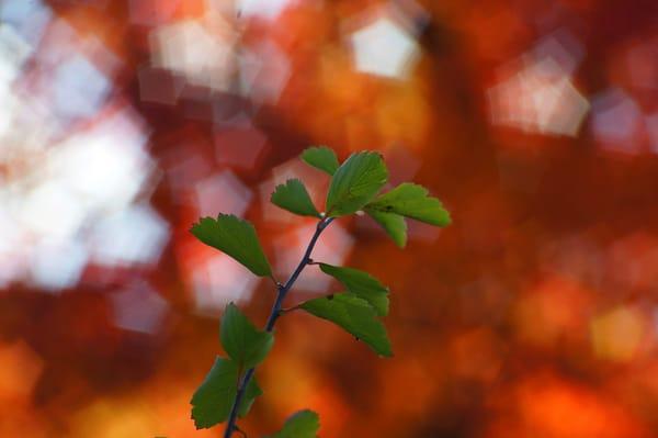 ветка с листьями  № 3792444 загрузить