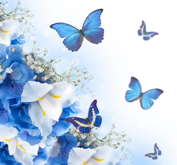 Картинки открытки с бабочками 99