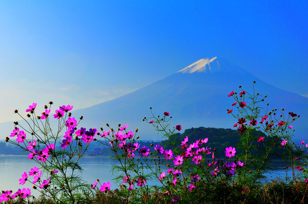 красивые картинки на рабочий стол природа цветы № 511997 без смс