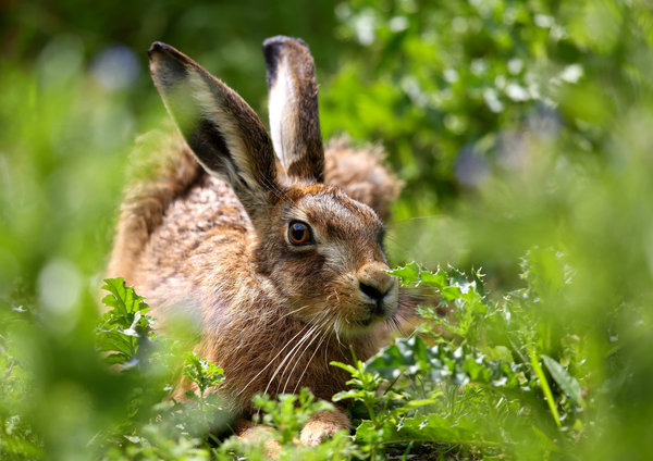 природа животные заяц nature animals hare  № 103304 без смс
