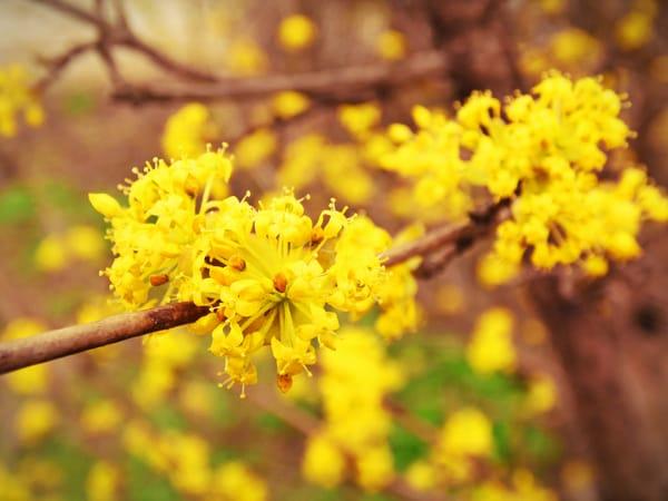 Фото цветов жёлтые цветут ранней весной