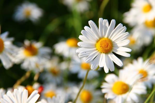 картинки на рабочий стол август цветы № 409708 без смс