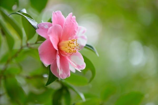 картинки на рабочий стол август цветы № 409662 бесплатно