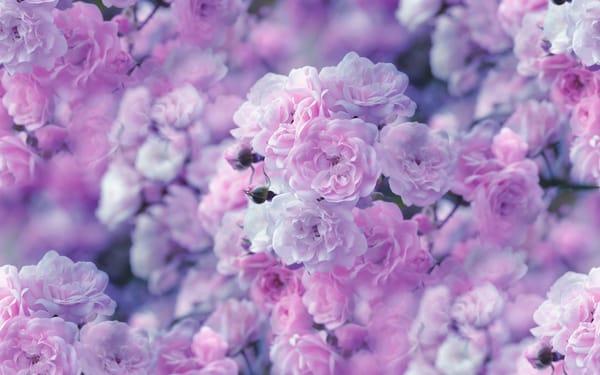 красивые картинки на рабочий стол цветы № 524419  скачать