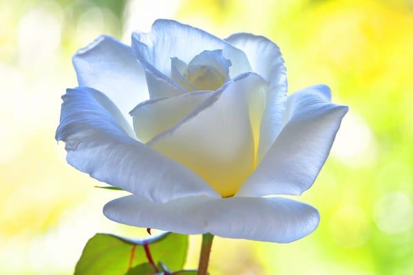 Цветок на следующую
