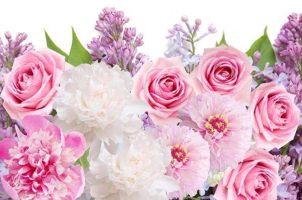 Картинки цветы пионы на рабочий стол
