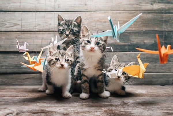 Обои на рабочий стол: кот, изучают, журавль, cats, хвост