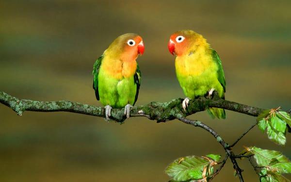 попугай макро деревья  № 737554 загрузить