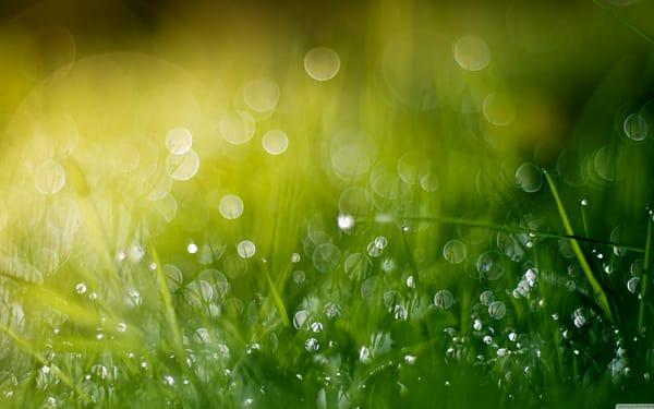 Зеленая, летняя трава  № 1074308  скачать