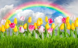 Обои: flowers, тюльпаны, sunshine, rainbow, colorful, meadow, grass, sky, весна, цветы, tulips, spring