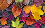 Обои: autumn, leaves, дерево, colorful, листья, wood, осенние