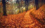 Обои: nature, trees, walk, road, colorful, листья, leaves, forest, шаги, лес, autumn, природа, park, дорога, осень, steps, парк, path, деревья, fall, colors