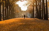 Обои: Autumn day, Bokeh, Hague, Nederland