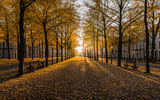 Обои: Golden Hour, Nederland, Hague