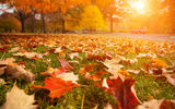 Обои для рабочего стола: sun, beautiful, leaves, road, landscape, Autumn trees, nature, close-up