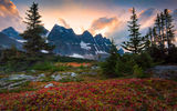 Обои для рабочего стола: canada, fall color surrounding the ramparts - the ramparts, tonquin valley, alberta, jasper national park