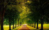Обои для рабочего стола: trees, hillsborough park, gb, sheffield, england, alley