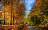Обои для рабочего стола: england, gb, winchester, hampshire, autumn color
