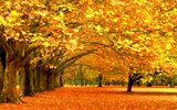 Обои: trees, fall color, leaves, break of autumn