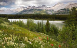 Обои для рабочего стола: Wildflowers at Peter Lougheed Provincial Park, AB, Canada, Kananaskis