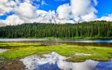 Обои: Mt Rainier National Park, лес, река, горы