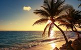 Картинки на телефон: Palm tree on the tropical beach, море, пальмы, sunrise shot, пейзаж, природа, берег, Dominican Republic, волны, пляж, закат