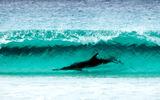 Обои для рабочего стола: sea, wave turquoise color, Le Grand NP, shore, Cape, breathtaking sight, nature, dolphin, Surfing, water