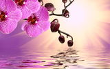 Обои: цветы, beautiful, pink, orchid, reflection, sunshine, орхидея, water, flowers