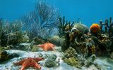 Обои: sand, ocean, coral, tropical, underwater, reef, starfish