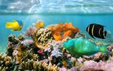 Обои для рабочего стола: fishes, reef, ocean, underwater, tropical, coral
