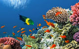 Обои: underwater, ocean, coral, tropical, подводный мир, fishes, reef, коралловый риф, рыбки