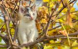 Обои для рабочего стола: autumn, cat, buds, puppy, tree, foliage, branches