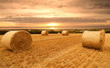 Обои: природа, поле, пейзаж, scenery, небо, облака, пшеница, view, bales, sunset, landscape, закат, field, wheat, clouds, sky, nature