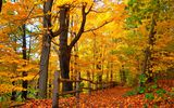 Картинки_для_телефона: nature, colorful, лес, деревья, парк, walk, park, осень, leaves, autumn, forest, листья, trees, дорога, fall, colors, road, природа, path
