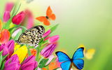 Обои: flowers, цветы, spring, tulips, butterflies, fresh, бабочки, colorful, тюльпаны, весна, beautiful, purple, yellow