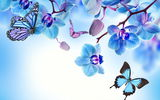Обои: orchid, blue, цветы, butterflies, бабочки, flowers, beautiful, орхидея