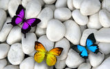 Обои: бабочки, камни, butterflies, design by Marika, white stones, colorful