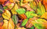 Обои: осень, leaves, autumn, листья, осенние, texture, colorful
