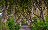 Обои: England, аллея, Bregagh Road, деревья, Северная Ирландия, Англия, бук, Northern Ireland, Dark Hedges, дорога