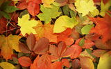 Обои: autumn, fall, листья, осень, leaves