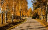 Обои: nature, colors, парк, дорога, trees, leaves, осень, листья, road, природа, park, лес, autumn, fall, path, colorful, forest, деревья, walk