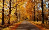 Обои: nature, forest, colors, дорога, autumn, парк, road, деревья, colorful, fall, осень, природа, trees, path, leaves, листья, park, walk, лес