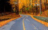 Обои: road, colorful, path, парк, природа, colors, осень, autumn, дорога, walk, leaves, park, forest, fall, лес, trees, деревья, листья, nature
