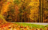 Обои: листья, дорога, walk, leaves, path, colors, trees, fall, colorful, nature, природа, autumn, осень, road