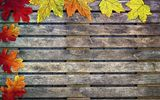 Обои: осень, colorful, wood, дерево, leaves, autumn, клен, листья, maple, осенние