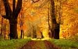 Картинки_для_телефона: nature, fall, path, листья, colors, осень, walk, colorful, дорога, деревья, лес, park, trees, парк, природа, leaves, forest, autumn, road