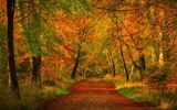 Картинки_для_телефона: nature, trees, природа, листья, деревья, autumn, colors, дорога, path, forest, парк, fall, walk, colorful, park, leaves, лес, осень, road